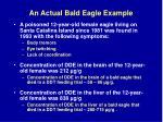 an actual bald eagle example