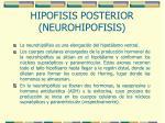 hipofisis posterior neurohipofisis