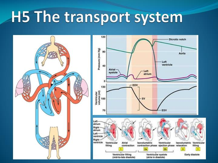 h5 the transport system n.