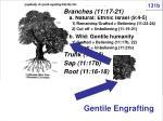 gentile engrafting