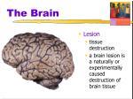 the brain4