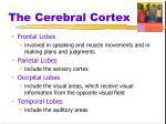 the cerebral cortex1
