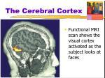 the cerebral cortex5