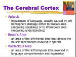 the cerebral cortex6
