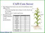 cafi corn stover