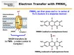 electron transfer with fmnh 2