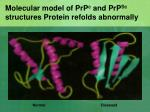 molecular model of prp c and prp sc structures protein refolds abnormally