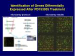 identification of genes differentially expressed after pd153035 treatment
