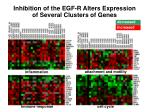inhibition of the egf r alters expression of several clusters of genes