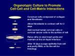 organotypic culture to promote cell cell and cell matrix interactions