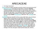 arecaceae1