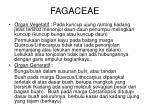 fagaceae1