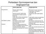 perbedaan gymnospermae dan angiospermae1