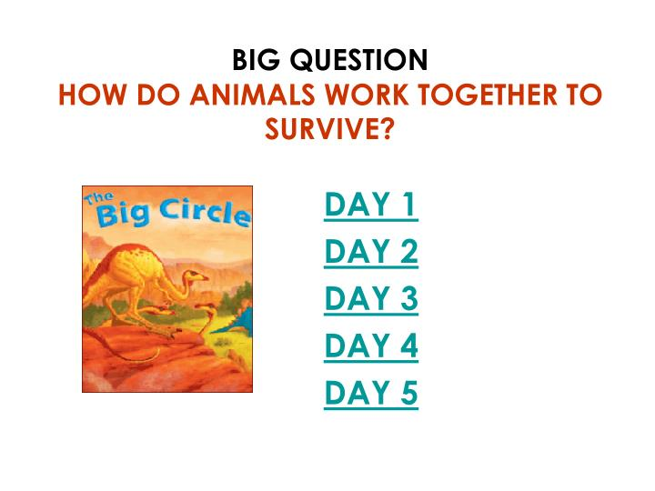 Big question how do animals work together to survive