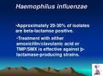 haemophilus influenzae2