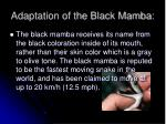 adaptation of the black mamba