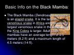 basic info on the black mamba