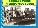forraje verde hidroponico usos