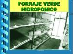 forraje verde hidroponico3