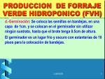 produccion de forraje verde hidroponico fvh1