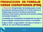 produccion de forraje verde hidroponico fvh2