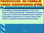 produccion de forraje verde hidroponico fvh3