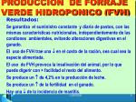 produccion de forraje verde hidroponico fvh5