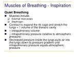 muscles of breathing inspiration