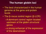the human globin loci