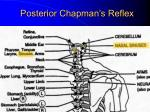 posterior chapman s reflex