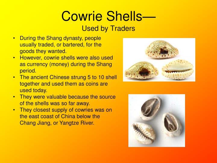 Cowrie Shells—