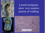 laetoli footprints show very modern pattern of walking