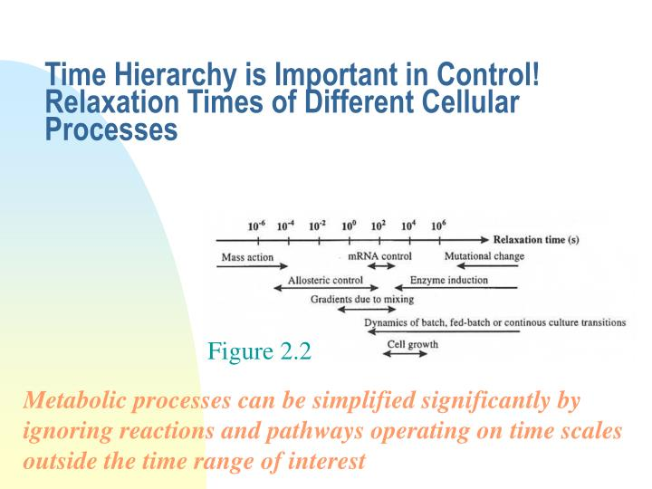 time hierarchy is important in control relaxation times of different cellular processes n.
