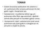 toraxi2