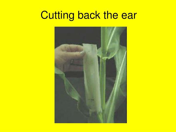 Cutting back the ear