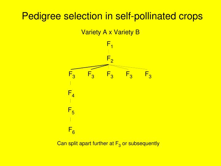 Pedigree selection in self-pollinated crops