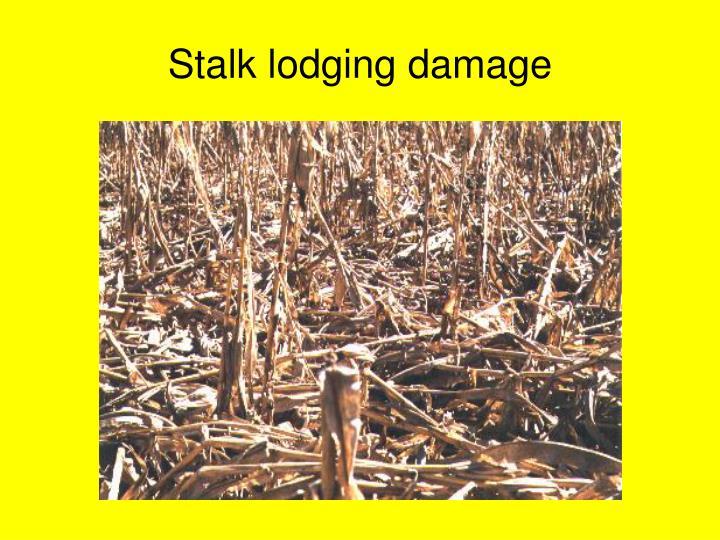 Stalk lodging damage