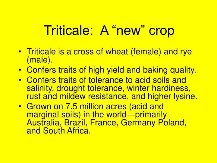 """Triticale:  A """"new"""" crop"""