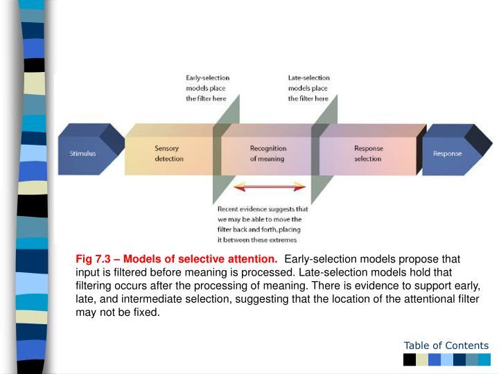 Fig 7.3 – Models of selective attention.