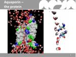 aquaporin the protein