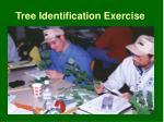 tree identification exercise
