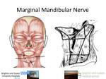 marginal mandibular nerve