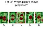 1 of 20 which picture shows prophase