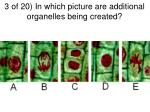 3 of 20 in which picture are additional organelles being created
