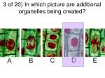 3 of 20 in which picture are additional organelles being created1