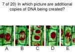 7 of 20 in which picture are additional copies of dna being created