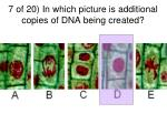 7 of 20 in which picture is additional copies of dna being created