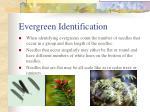 evergreen identification2