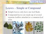 leaves simple or compound