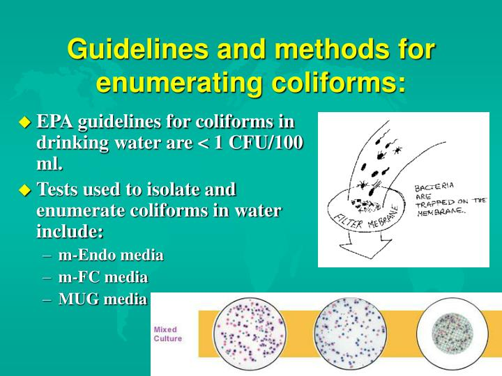 Guidelines and methods for enumerating coliforms:
